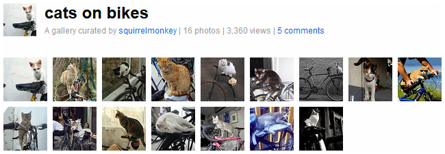 Gallery: cats on bikes