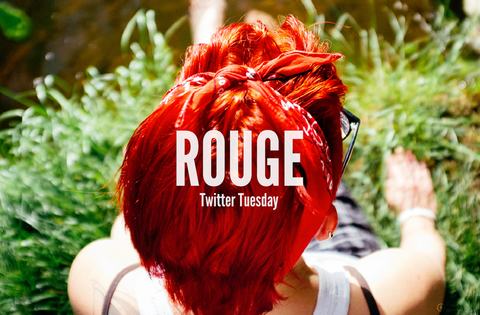 TwitterTuesday_Red_fr